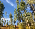 BP invests $5mn in forest carbon offsets leader Finite Resources