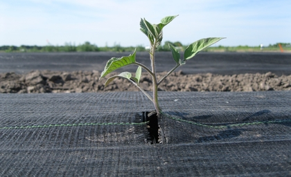 Clariant's bio-based additives for biopolymers awarded 'OK compost INDUSTRIAL' and 'OK biodegradable SOIL' certification