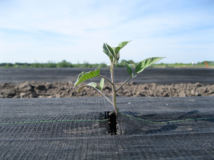 Licocare RBW 102 Vita certified biodegradable in soil.